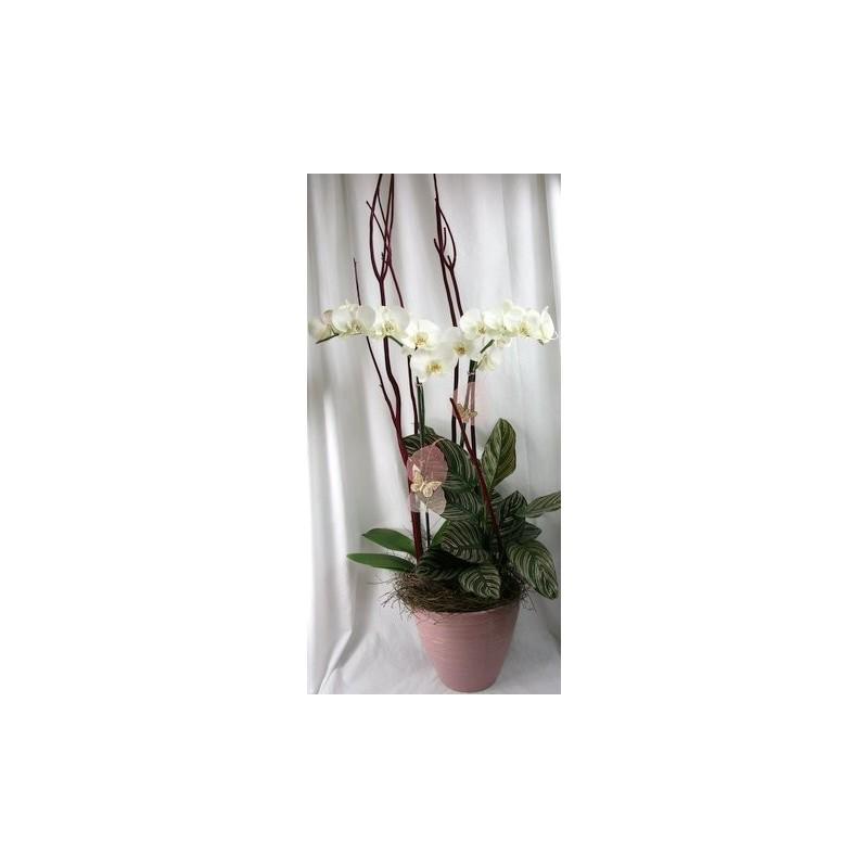 Plantes et orchidée