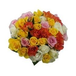 Roses mélanges
